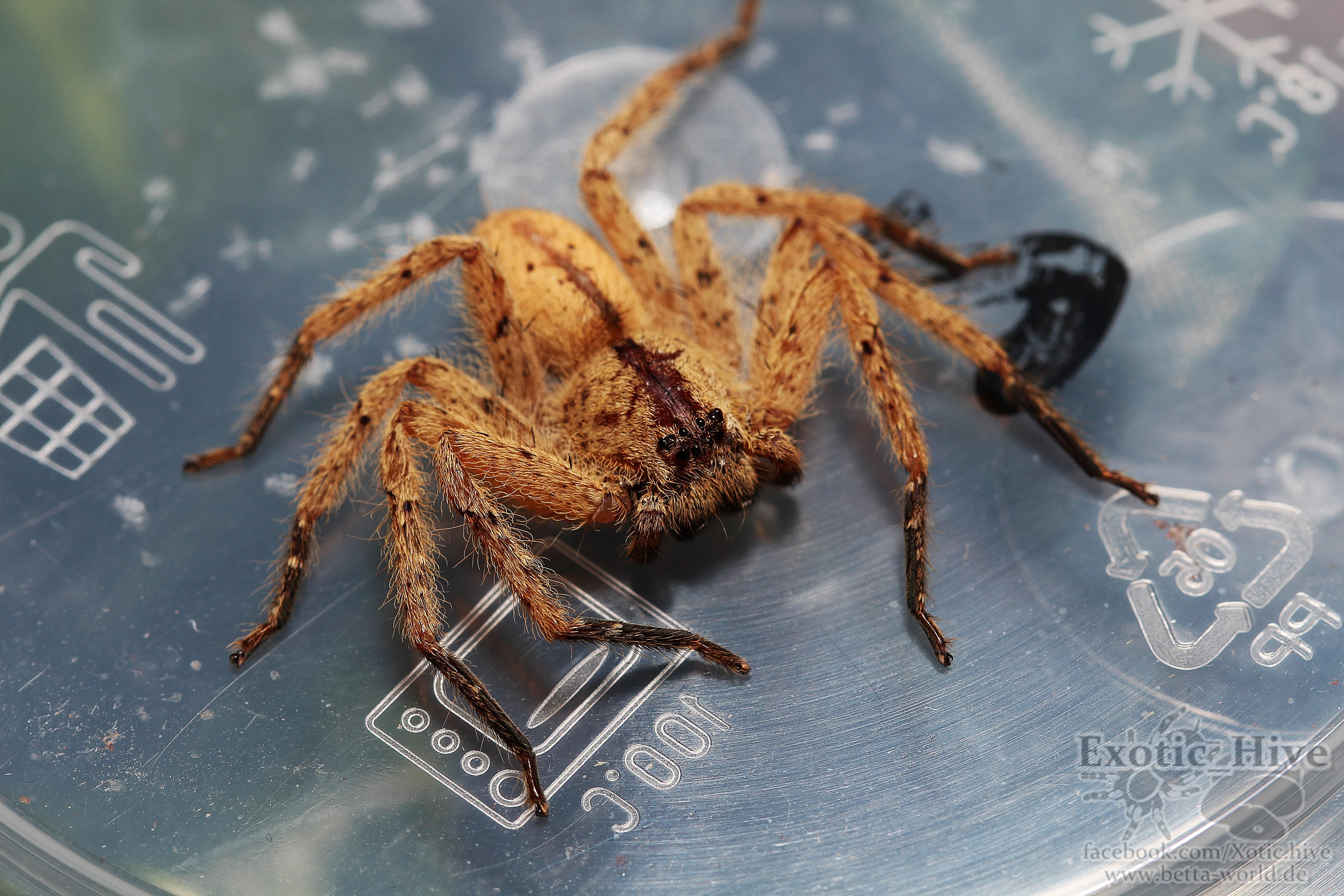 Weitere Spinnen